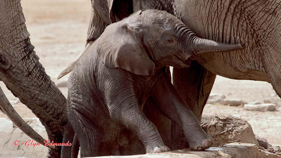 Baby Elephant at a Waterhole